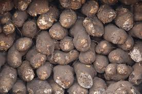 Yam Picture