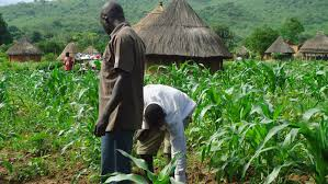 Farmers in Kano State