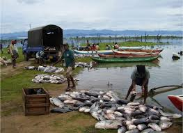fishermen in Anambra state