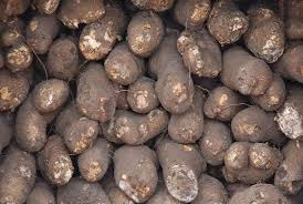 2 friends arraigned for stealing yam