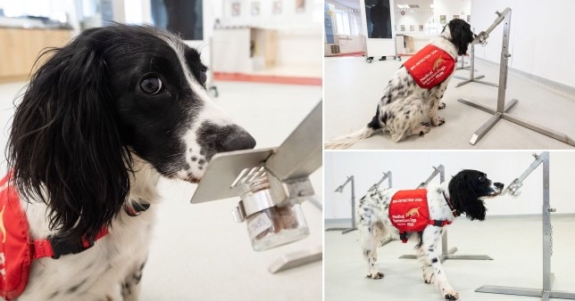 Dog Company Asks For £1million Donation To Help Train Dogs To 'Smell Coronavirus'